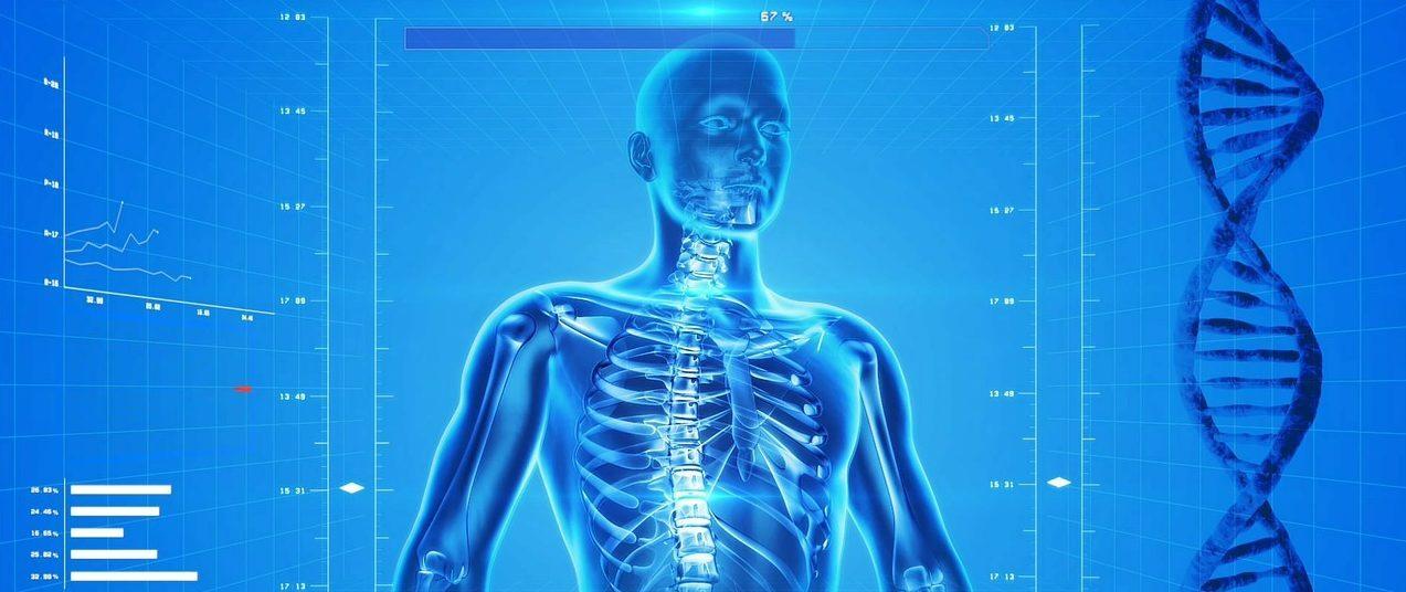 human-skeleton-163715_1280-e1481918290581